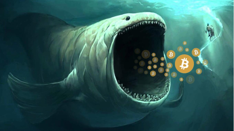 Bitcoin walvis