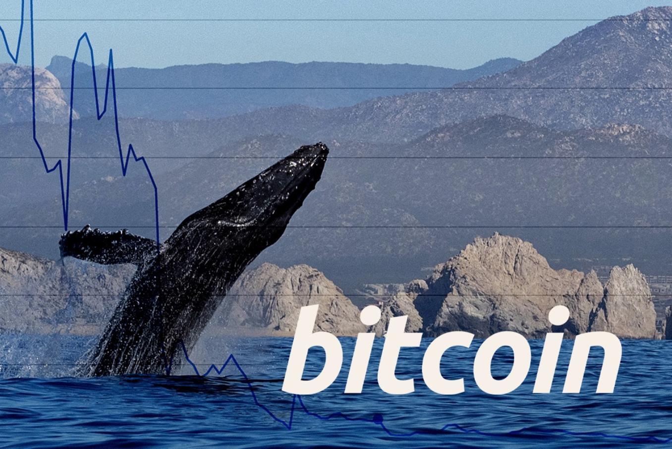Grote bitcoin transacties piek